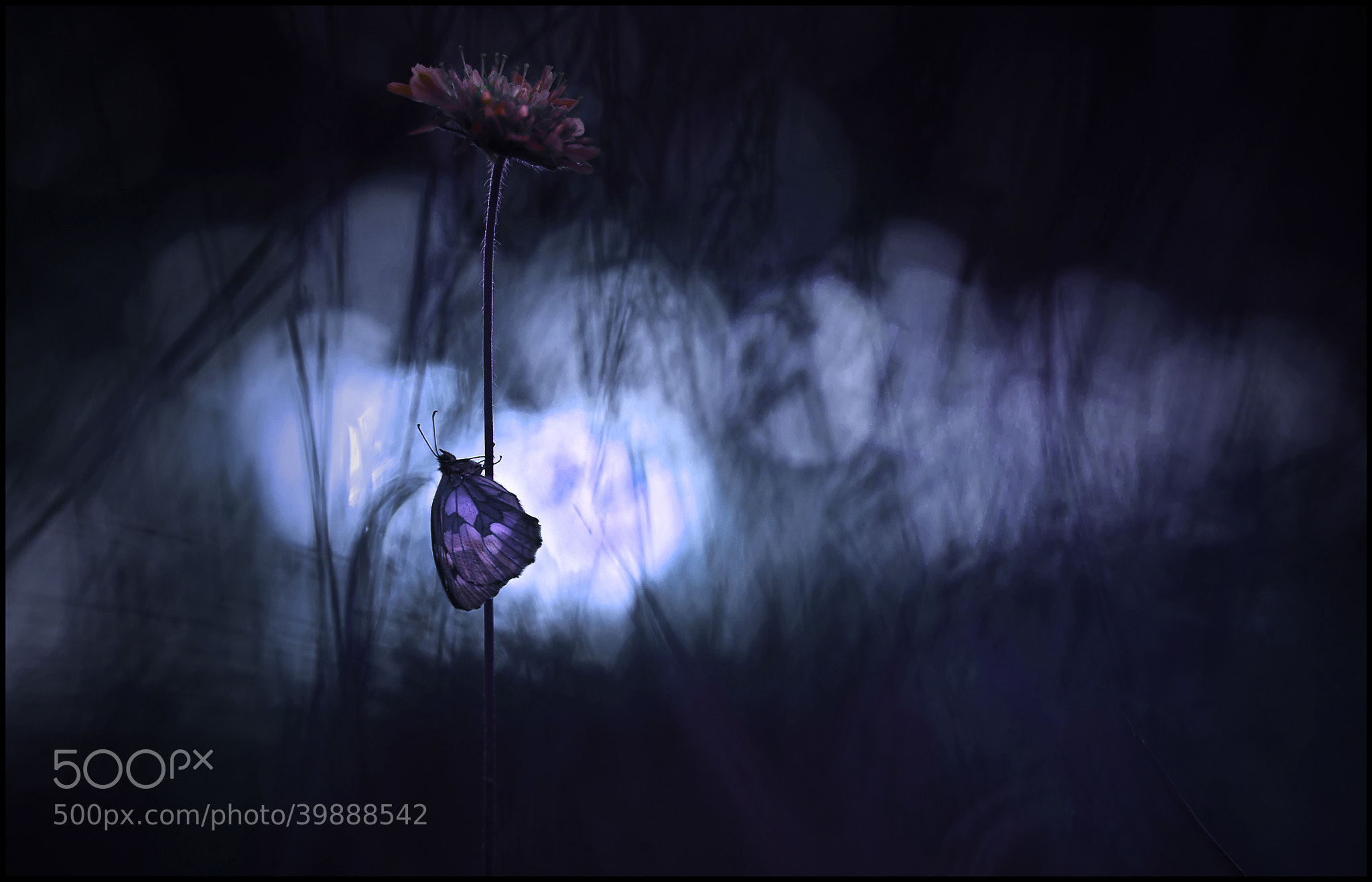 Photograph the light in the darkness by damien couprie on 500px