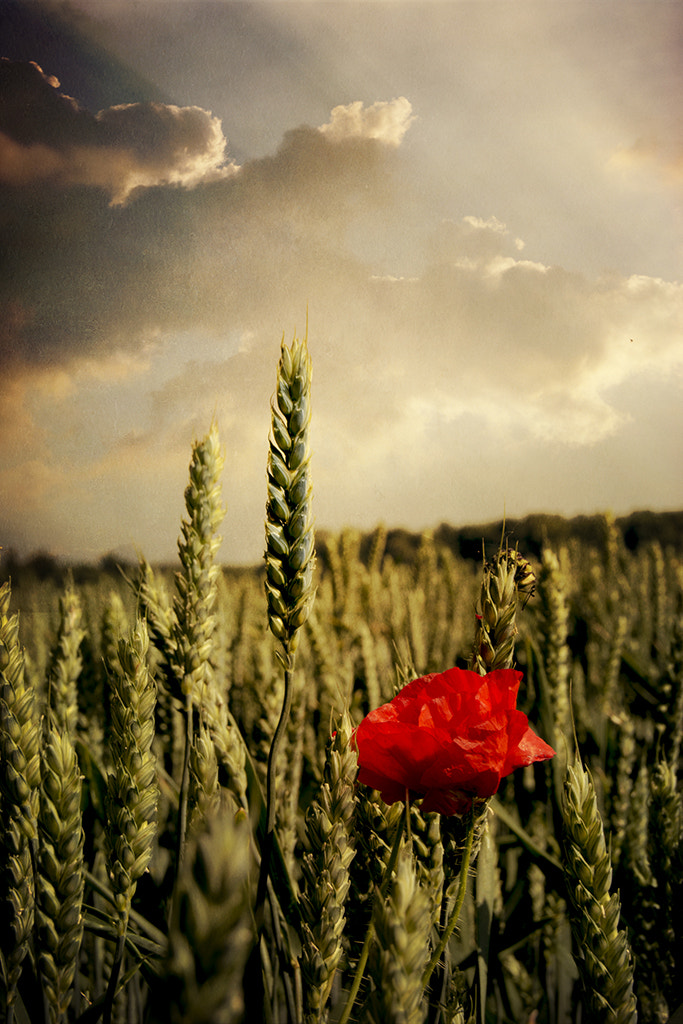 Photograph Poppy by Audran Gosling on 500px