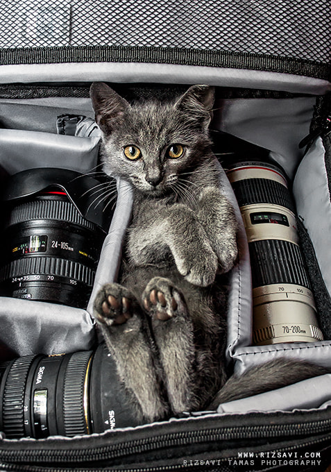 Photograph My Cat  by Rizsavi Tamás on 500px