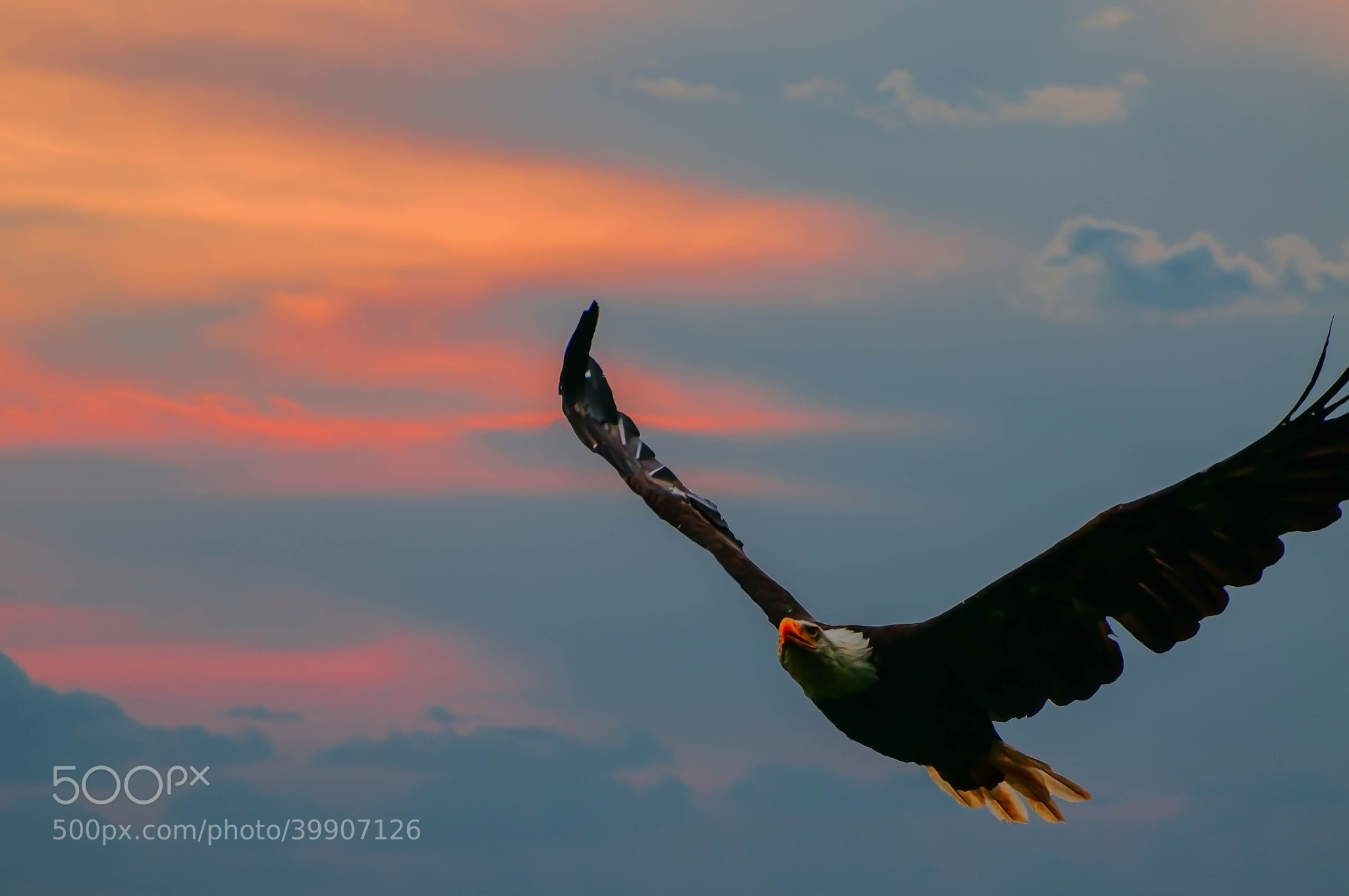 Photograph Flying under sunset by Jay Z on 500px