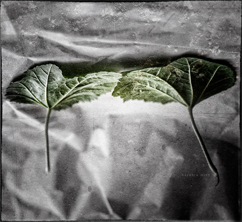 Photograph Touch me by Martina Roberts on 500px