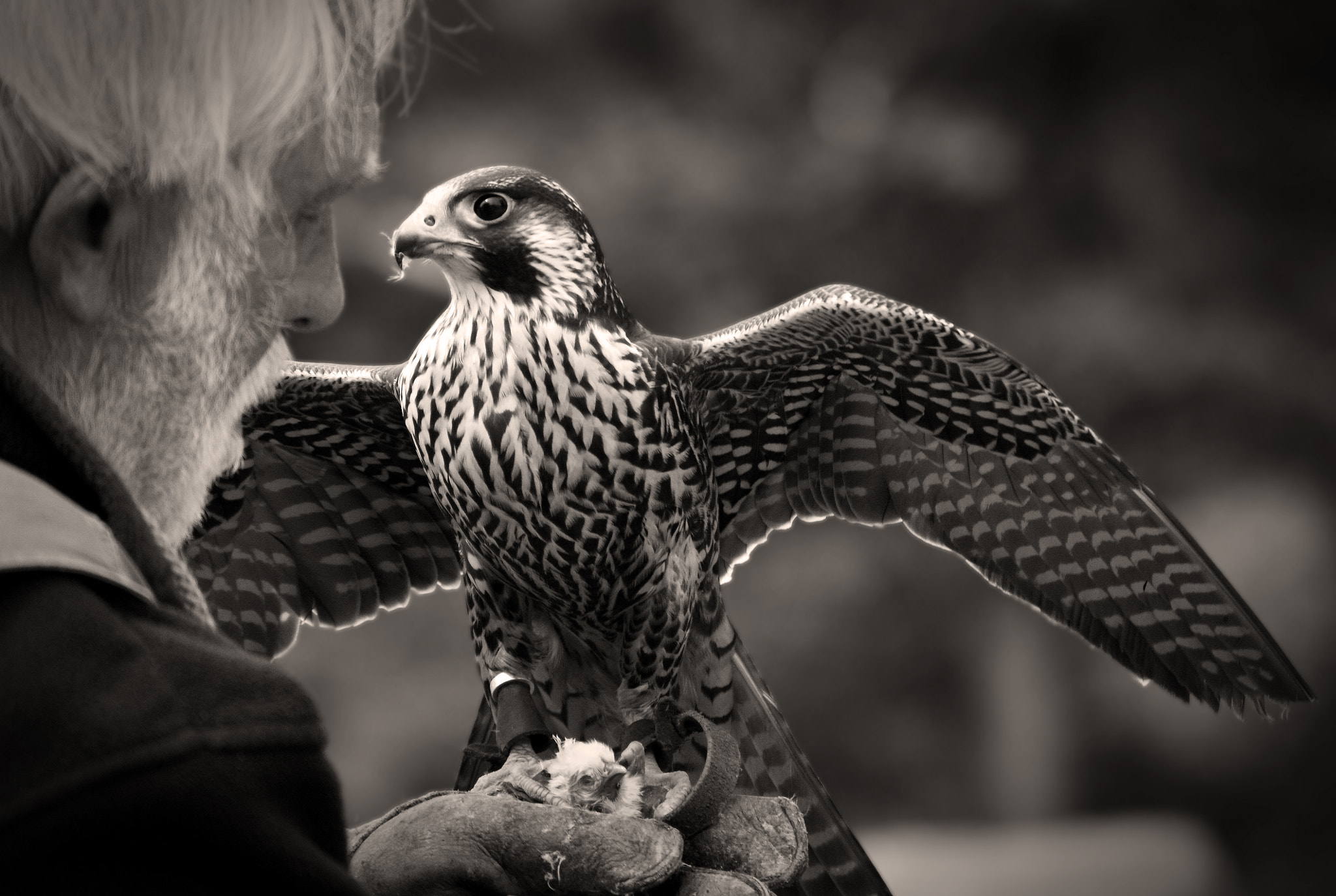 Photograph The Falconer by Andi Gast on 500px