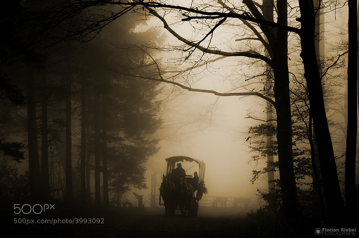 Photograph Kutsche im Nebel by Florian Riebel on 500px