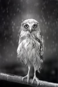 Standing in the rain...