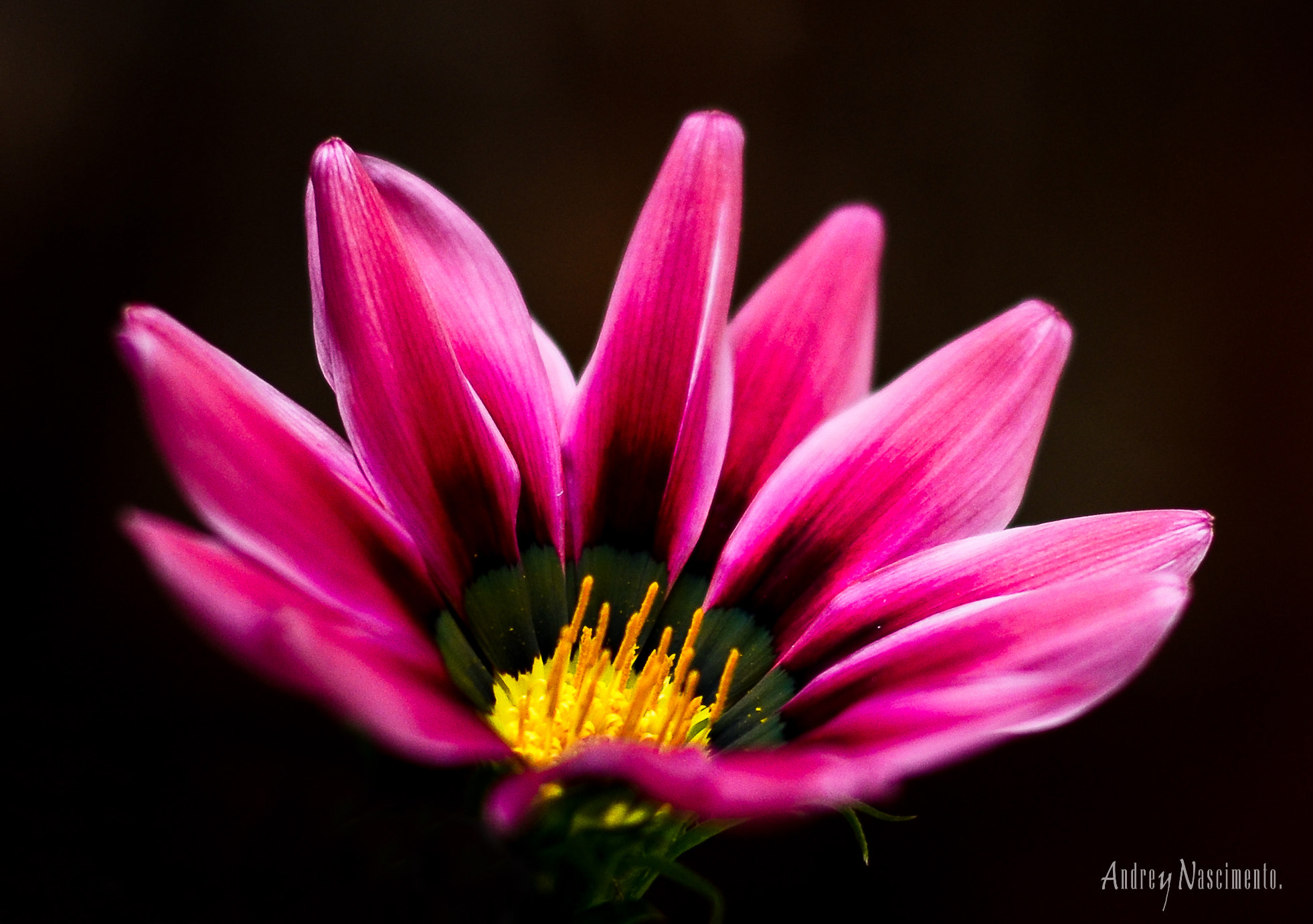 Photograph The light flower by Andrey Nascimento on 500px