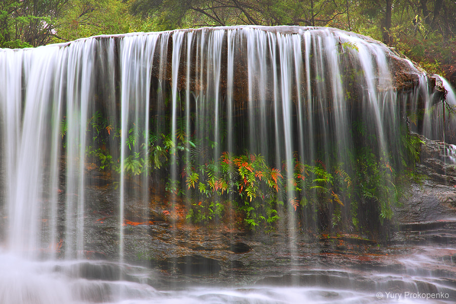 Photograph Weeping Rock Waterfall, Blue Mountains by Yury Prokopenko on 500px