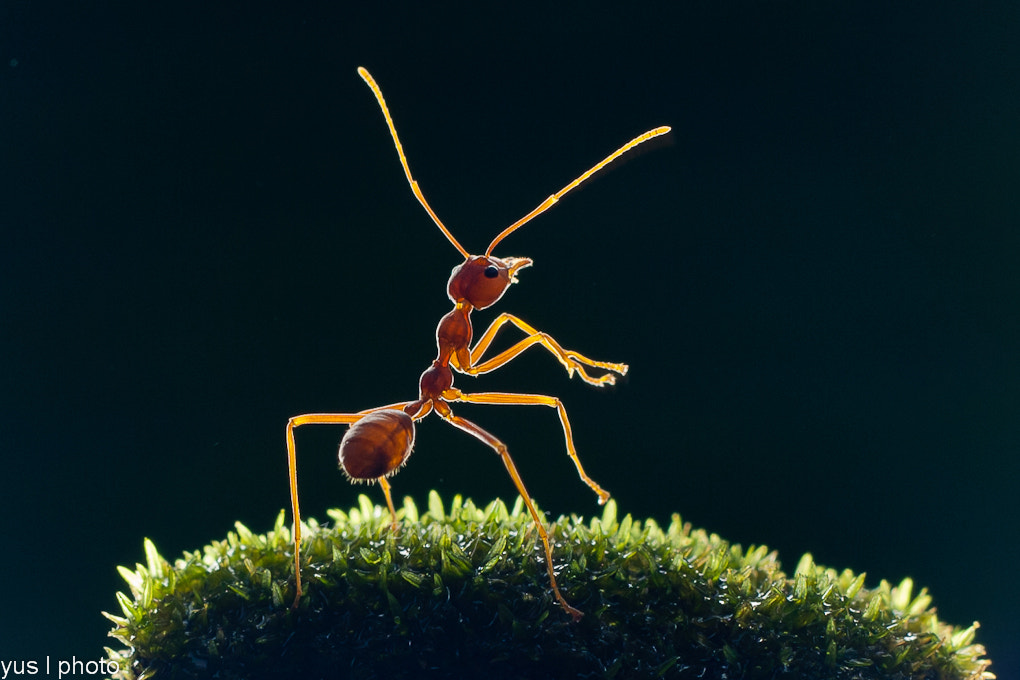 Photograph KungFu Ants by Yusnizam Yusof  on 500px