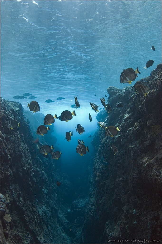 Photograph Seascape, Niue Island, South Pacific by Colin Gans on 500px