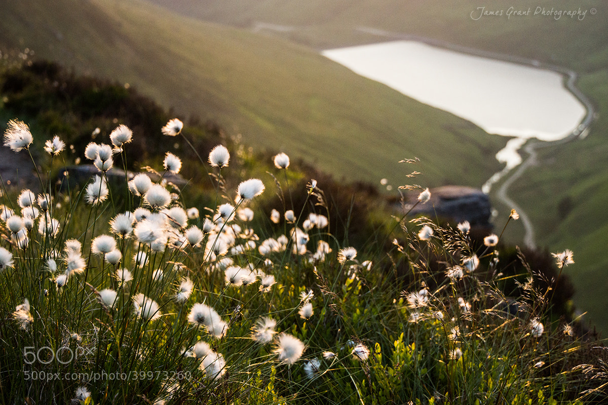 Photograph Greenfield Cotton Grass by James Grant on 500px