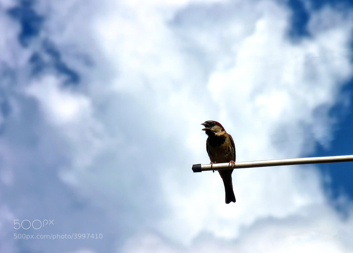 Photograph I think i can fly closer to the sky by Pedro Henrique Evangelista on 500px