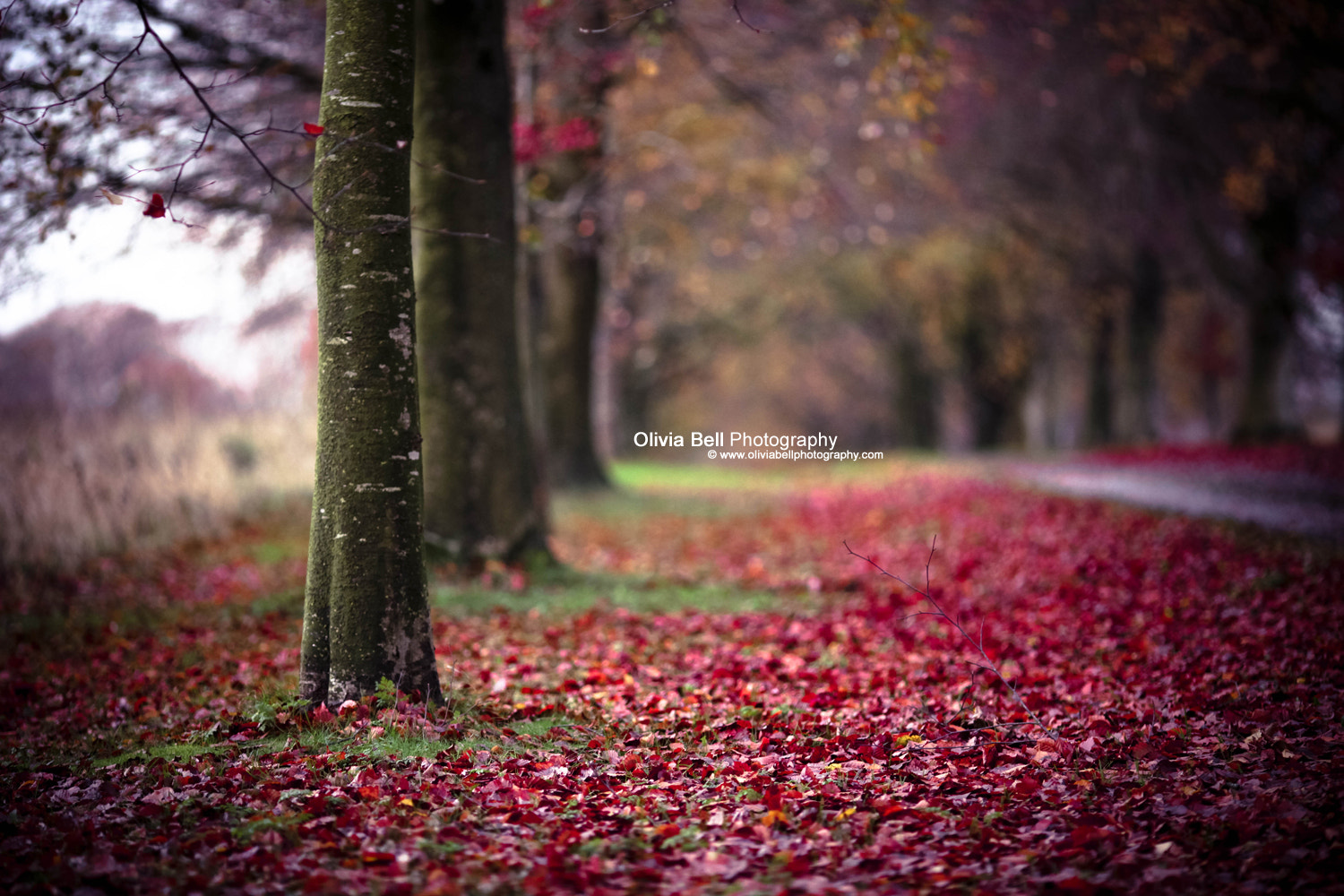 Photograph The Colour of My Heart by Olivia Bell on 500px