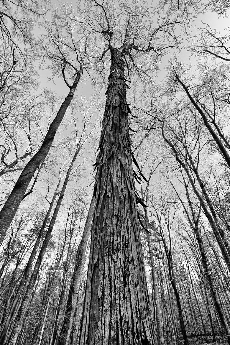 Photograph Tree by Cameron Creations on 500px