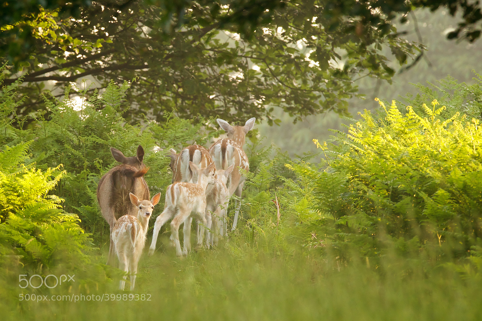 Photograph erm mum there's a man following us... by Mark Bridger on 500px