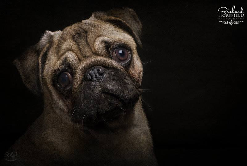 Photograph The Pug by Richard Horsfield on 500px