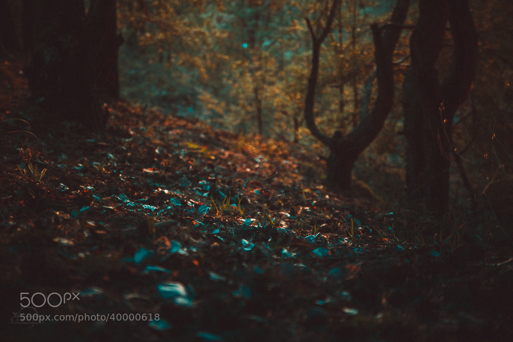 Photograph Untitled by Alexander Tulupov on 500px
