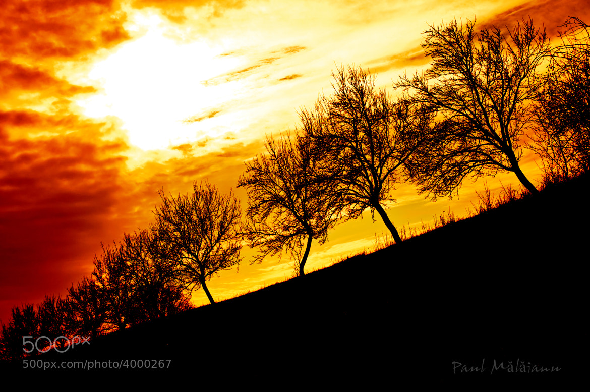Photograph Sunset and Trees by paul malaianu on 500px