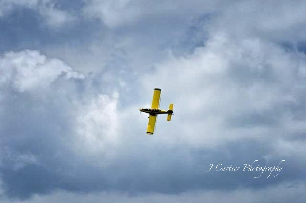 Photograph Free as a Yellow Bird by Jerome Cartier on 500px