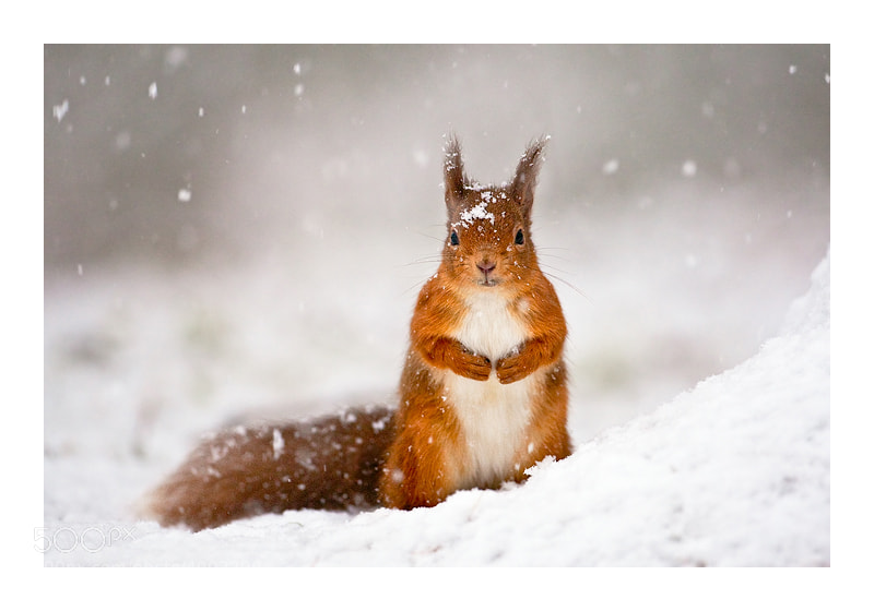 Let it snow by Jules Cox (JulesCox)) on 500px.com