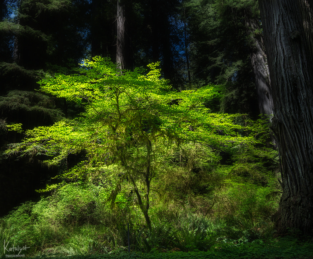 Photograph Forest light by Salty Cat on 500px