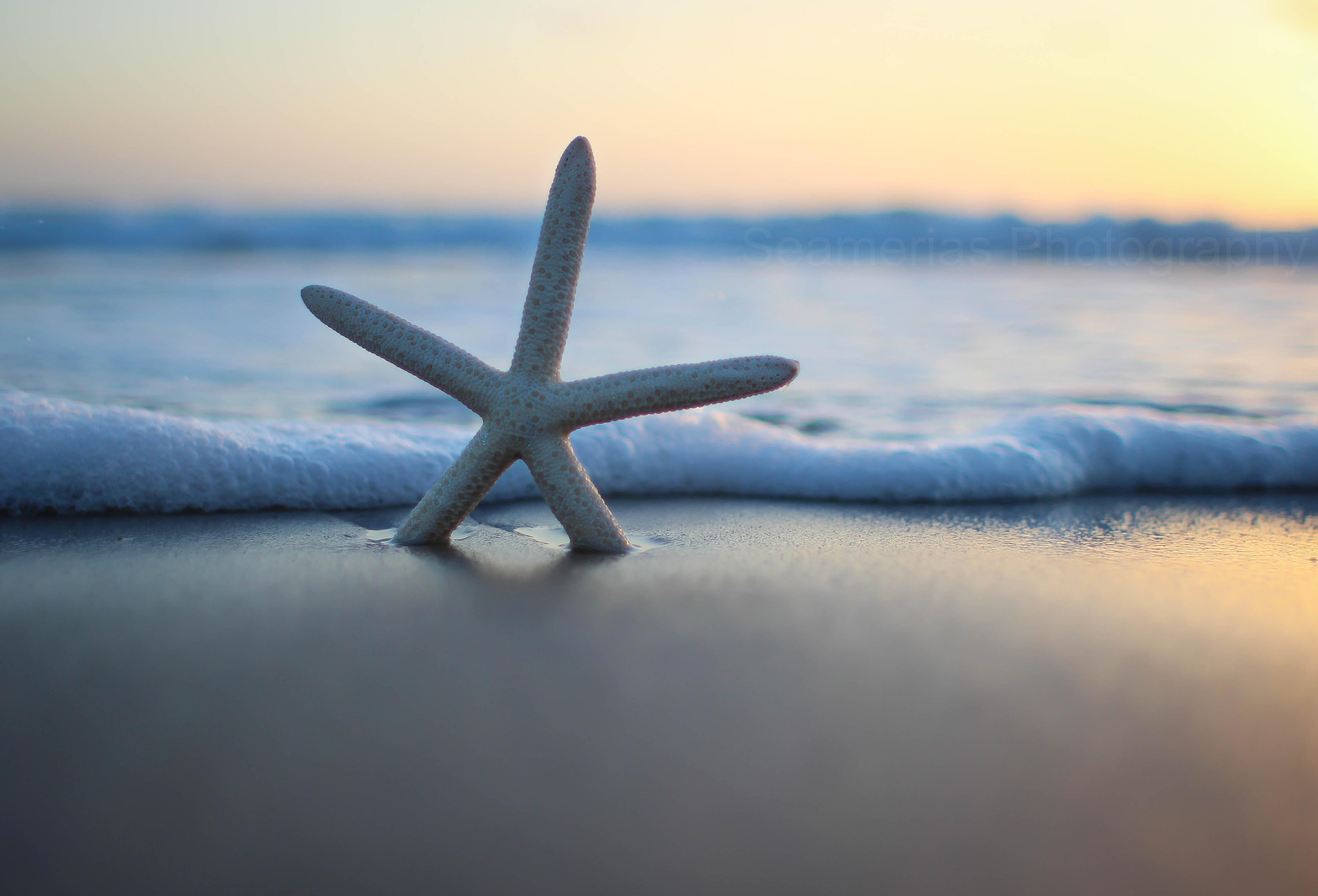 Photograph Starfish by Courtney D on 500px