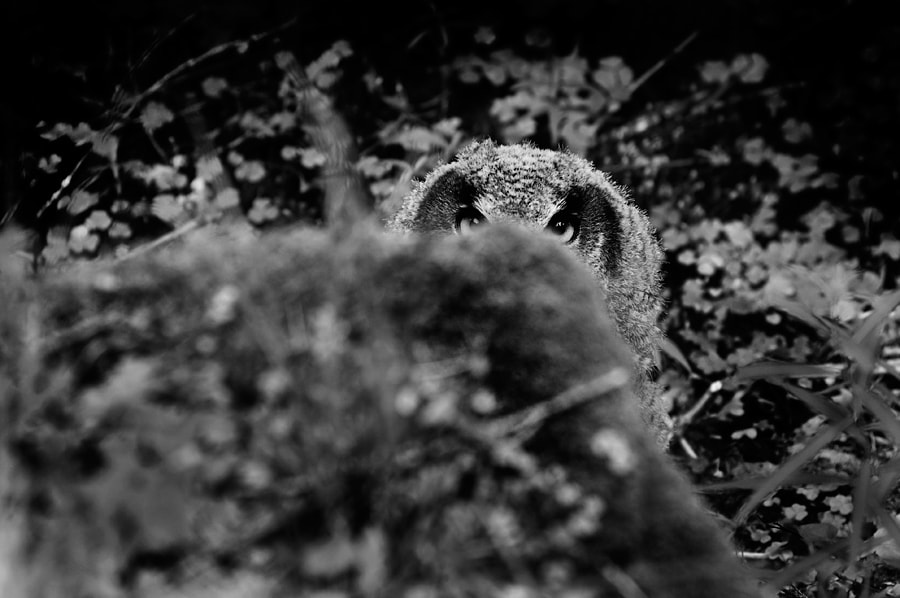 Photograph Owl hideout by Marcus Bj[Ö]rkman on 500px