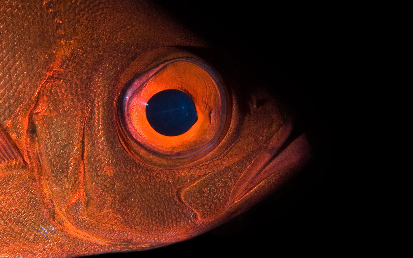 Photograph Big Eye by Dmitry Marchenko on 500px