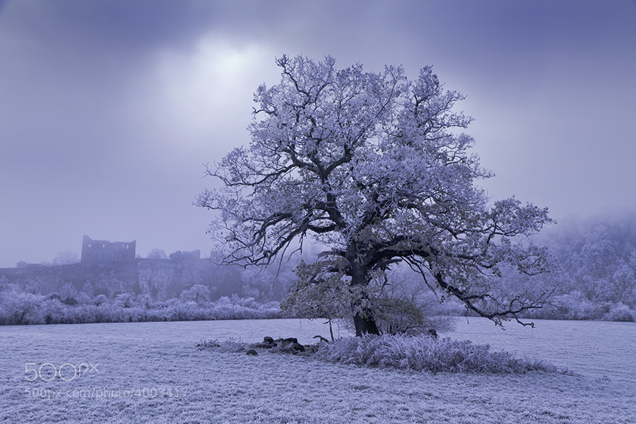 HEAVY FROST ON OAK TREE AND CHEPSTOW CASTLE