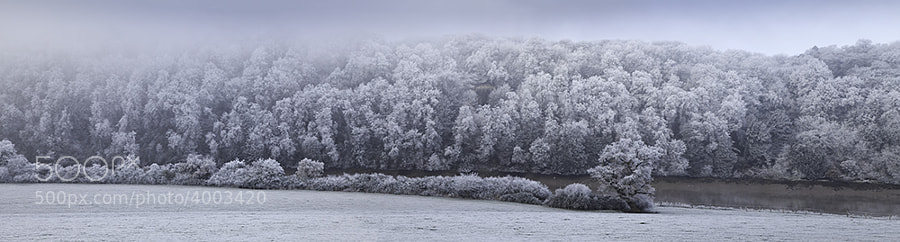Trees covered with hoar frost on river bank of the river Wye nr Chepstow Castle.