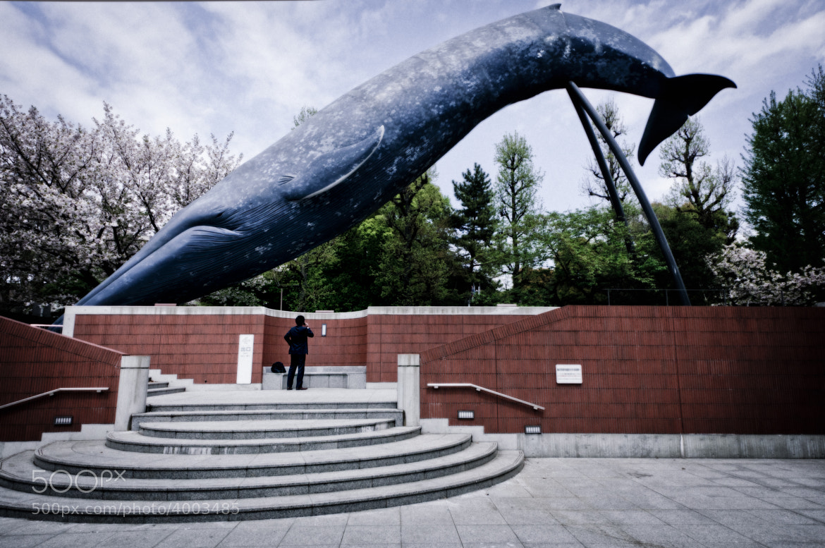 Photograph whale and a businessman  by Kouji Tomihisa on 500px