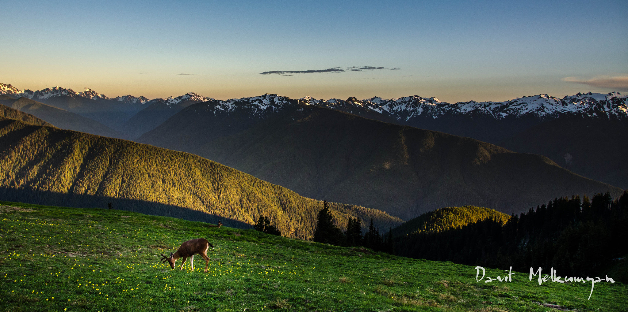 Photograph Hurricane Ridge, Olympic National Park WA by Davit Melkumyan on 500px
