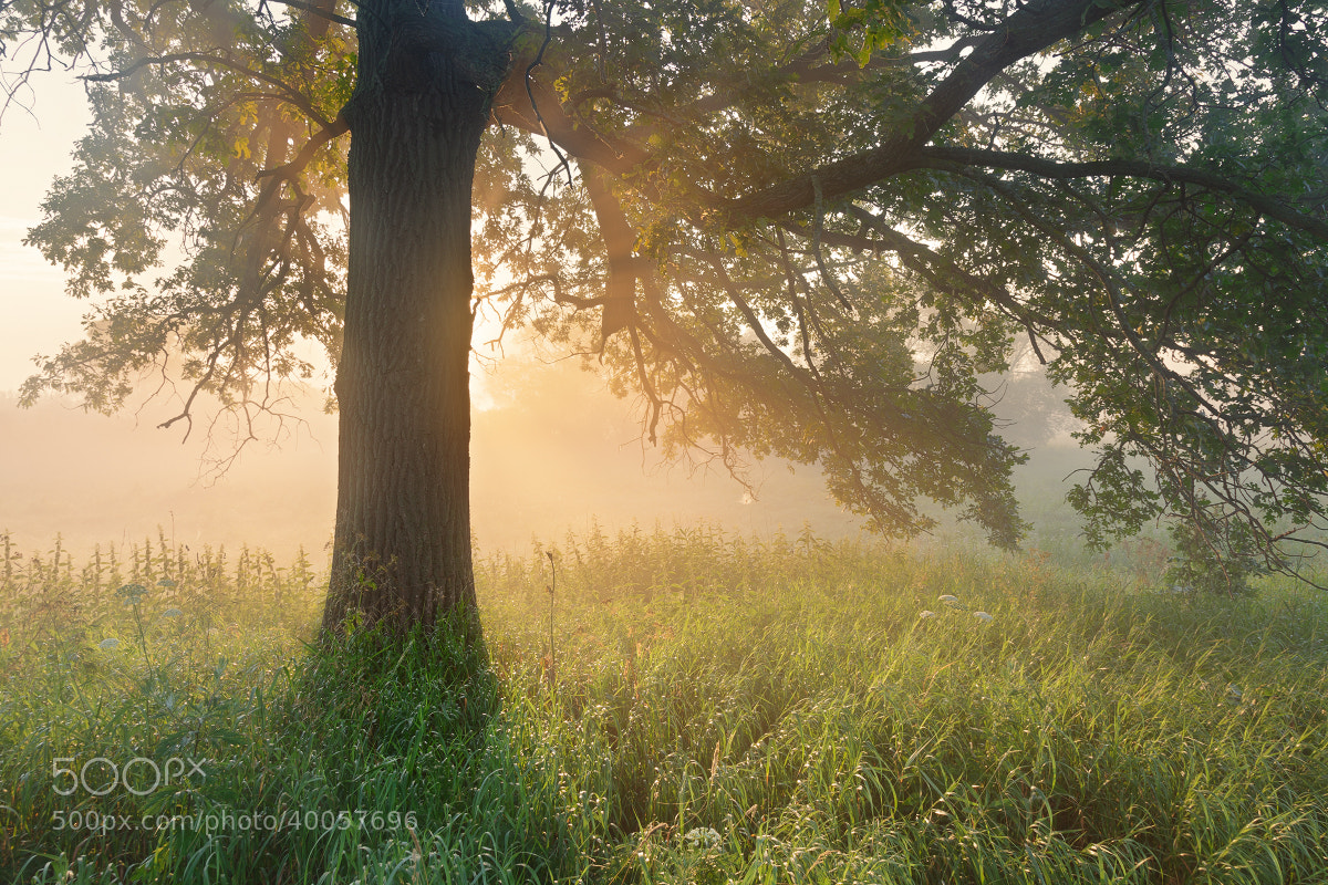 Photograph The morning in the oak grove by Sergey Ershov on 500px