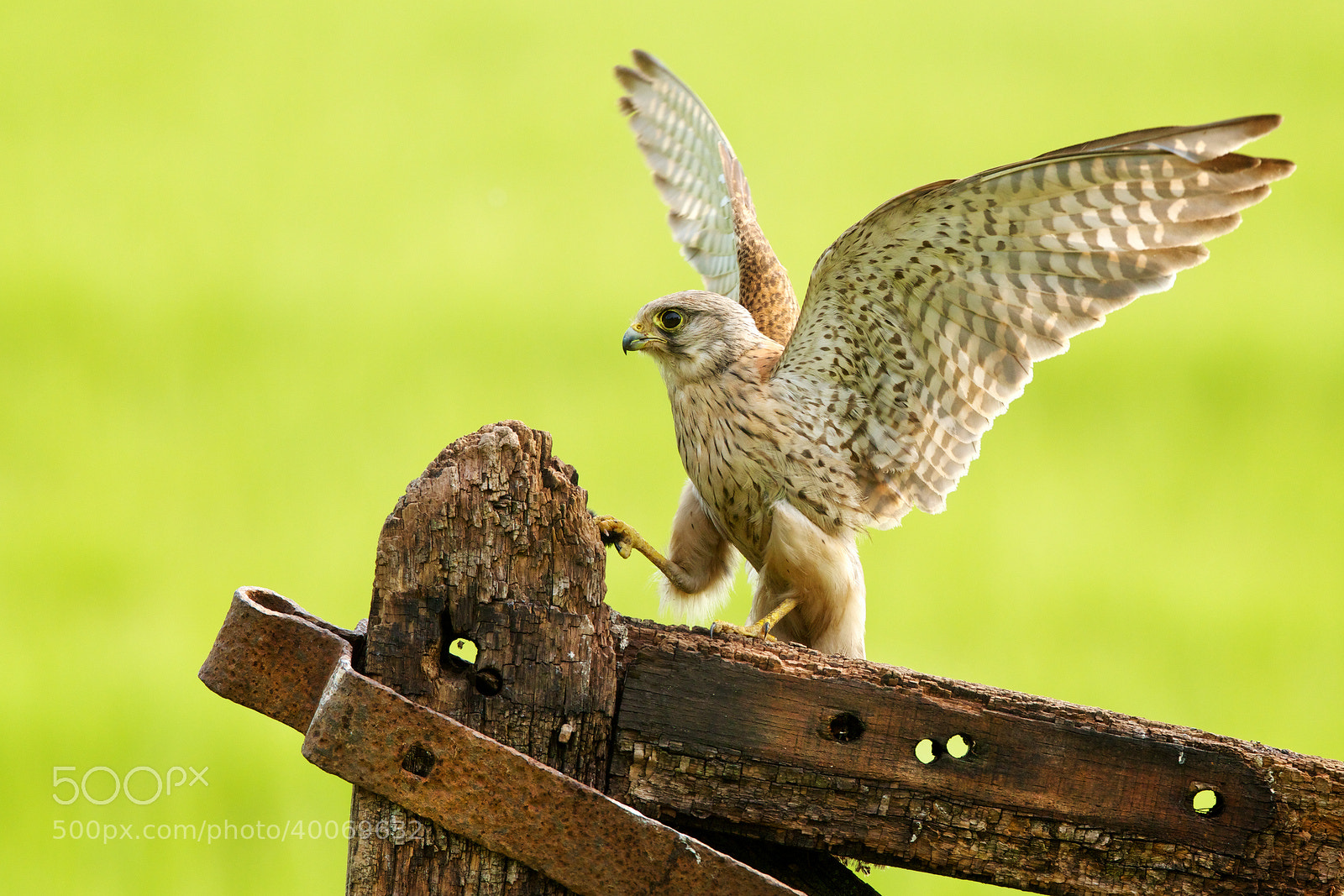 Photograph wings out, leg up... by Mark Bridger on 500px