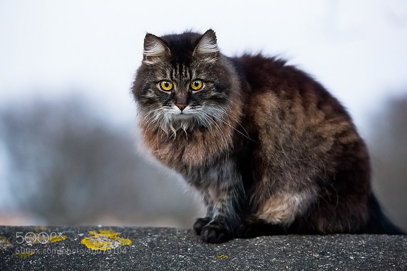 Photograph Katt by Anders Johansson on 500px