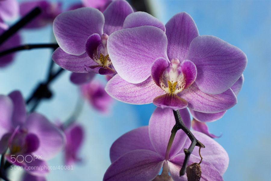 Photograph Tropical Extravaganza  by Elena Alhimovich on 500px