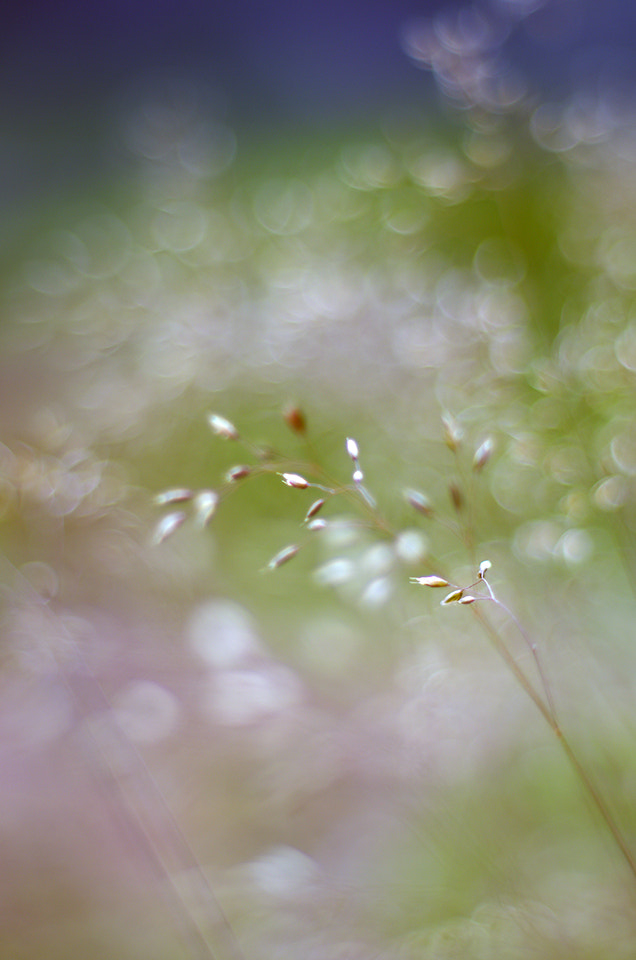 Photograph brokeh by Justas R on 500px