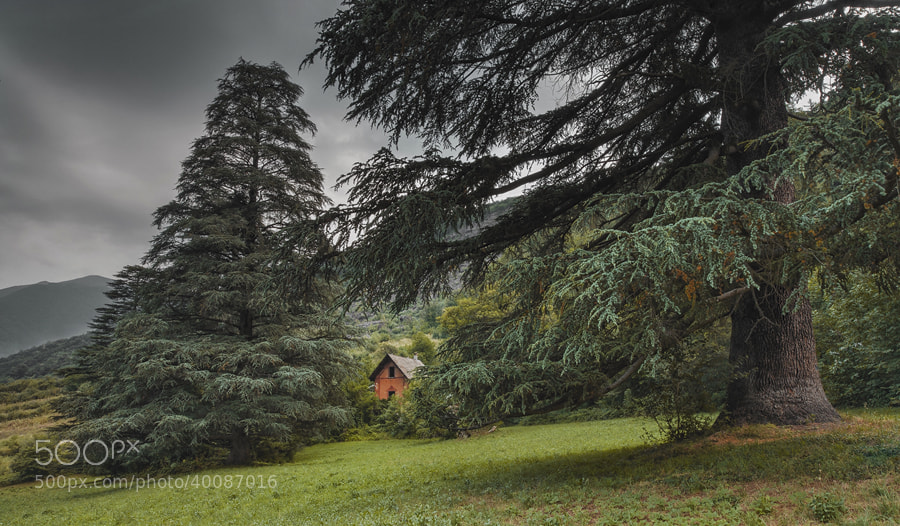 Photograph The House by FeFoPhotography  on 500px