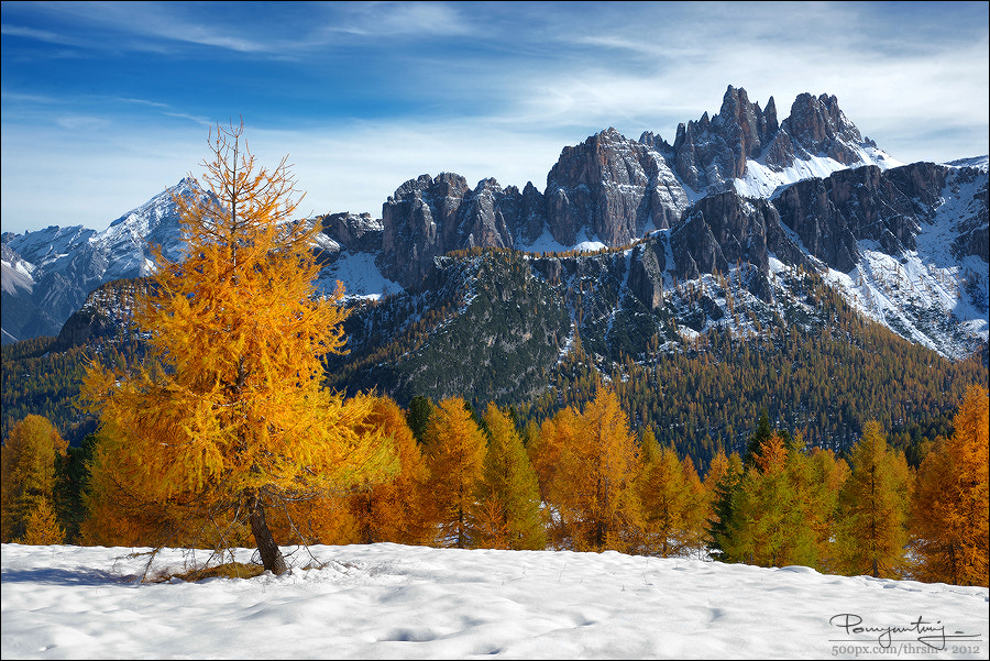 Photograph Alpen Gold by Andrew Thrasher on 500px