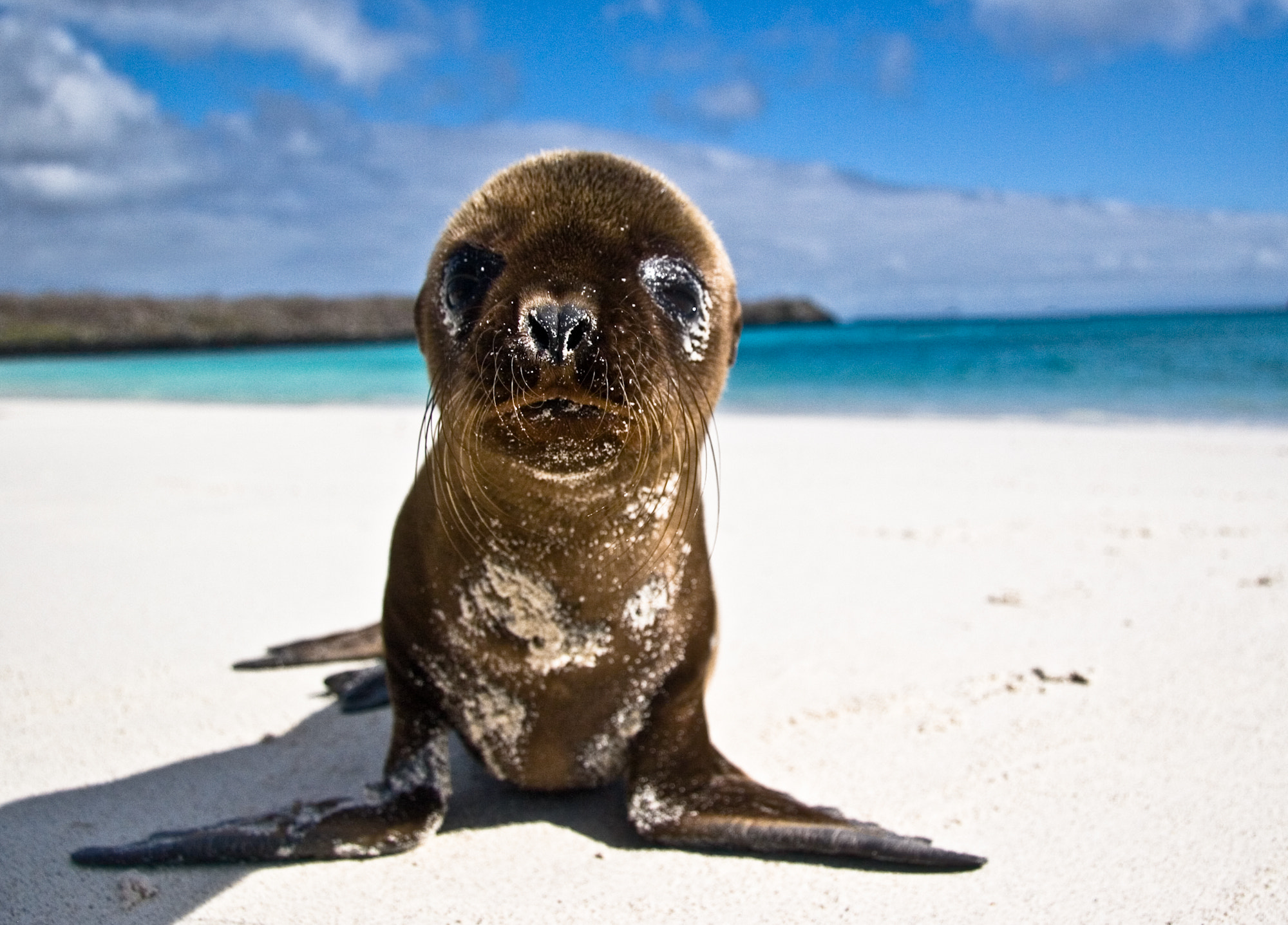 Photograph Galapagos Pup by Brian Fisher on 500px