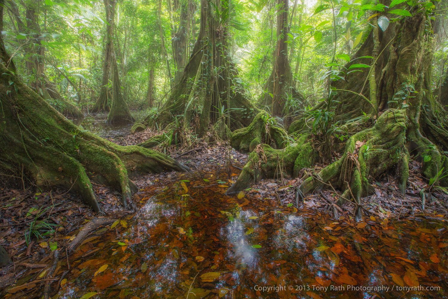 Photograph Kaway Swamp, Cockscomb Basin Wildlife Sanctuary, Belize by Tony Rath on 500px