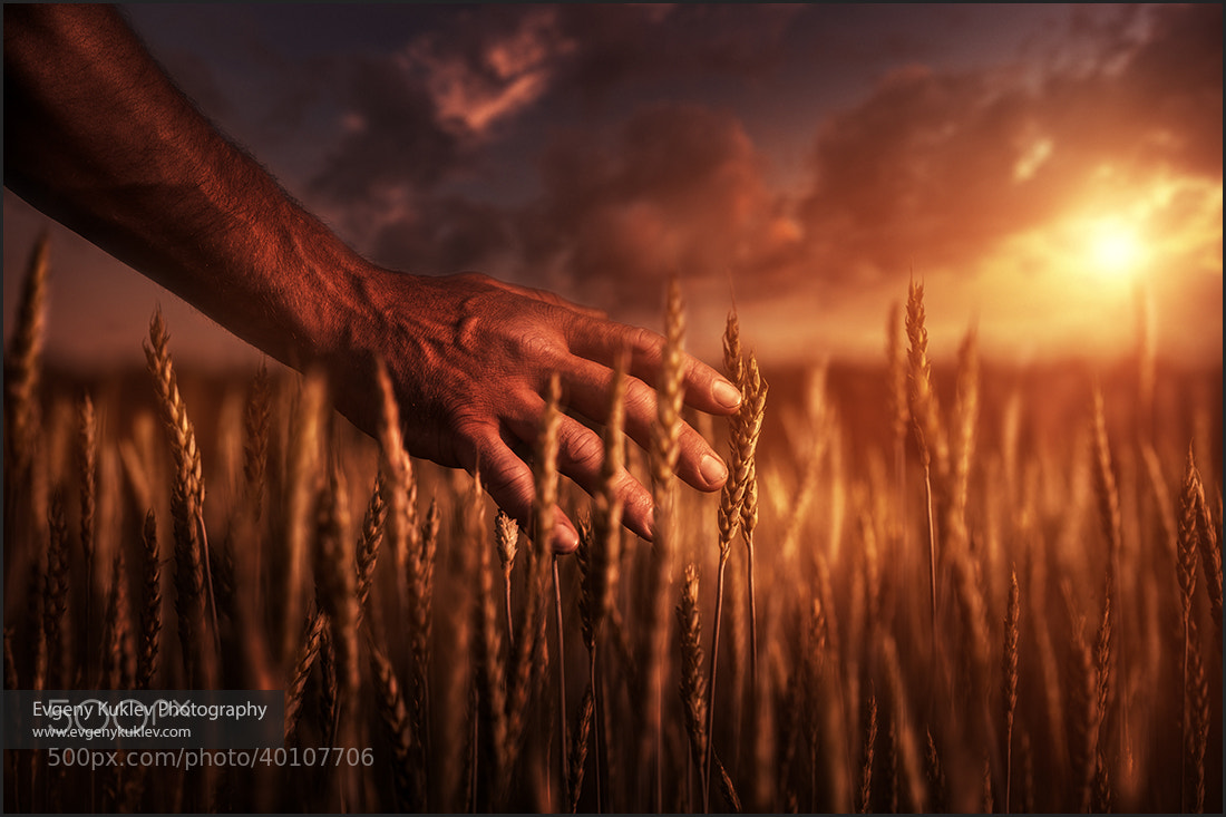 Photograph Farmer at sunset by Evgeny Kuklev on 500px