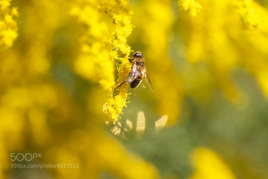 Photograph Bee by Benno Pütz on 500px