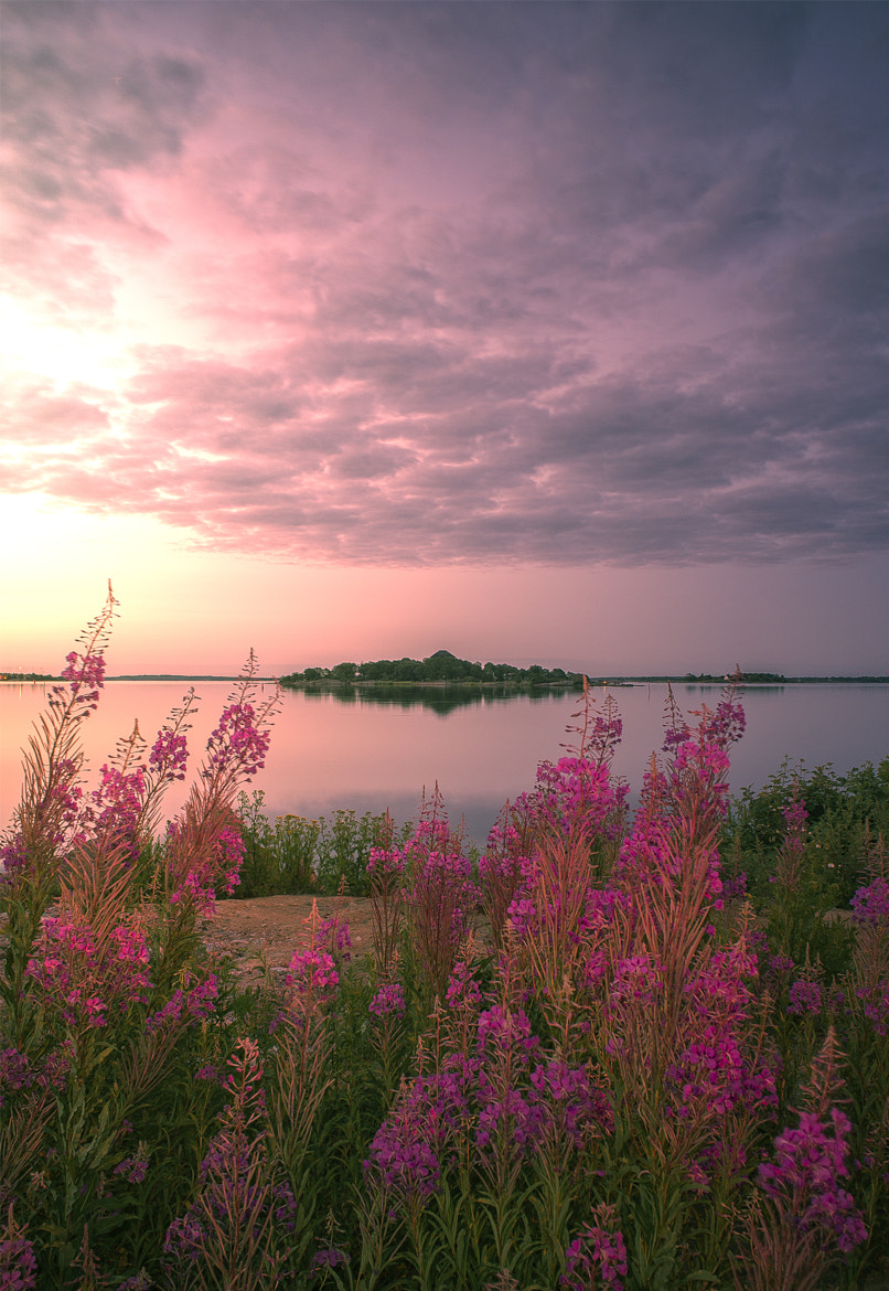 Photograph Flowers and Sunrise by Ola Warringer on 500px