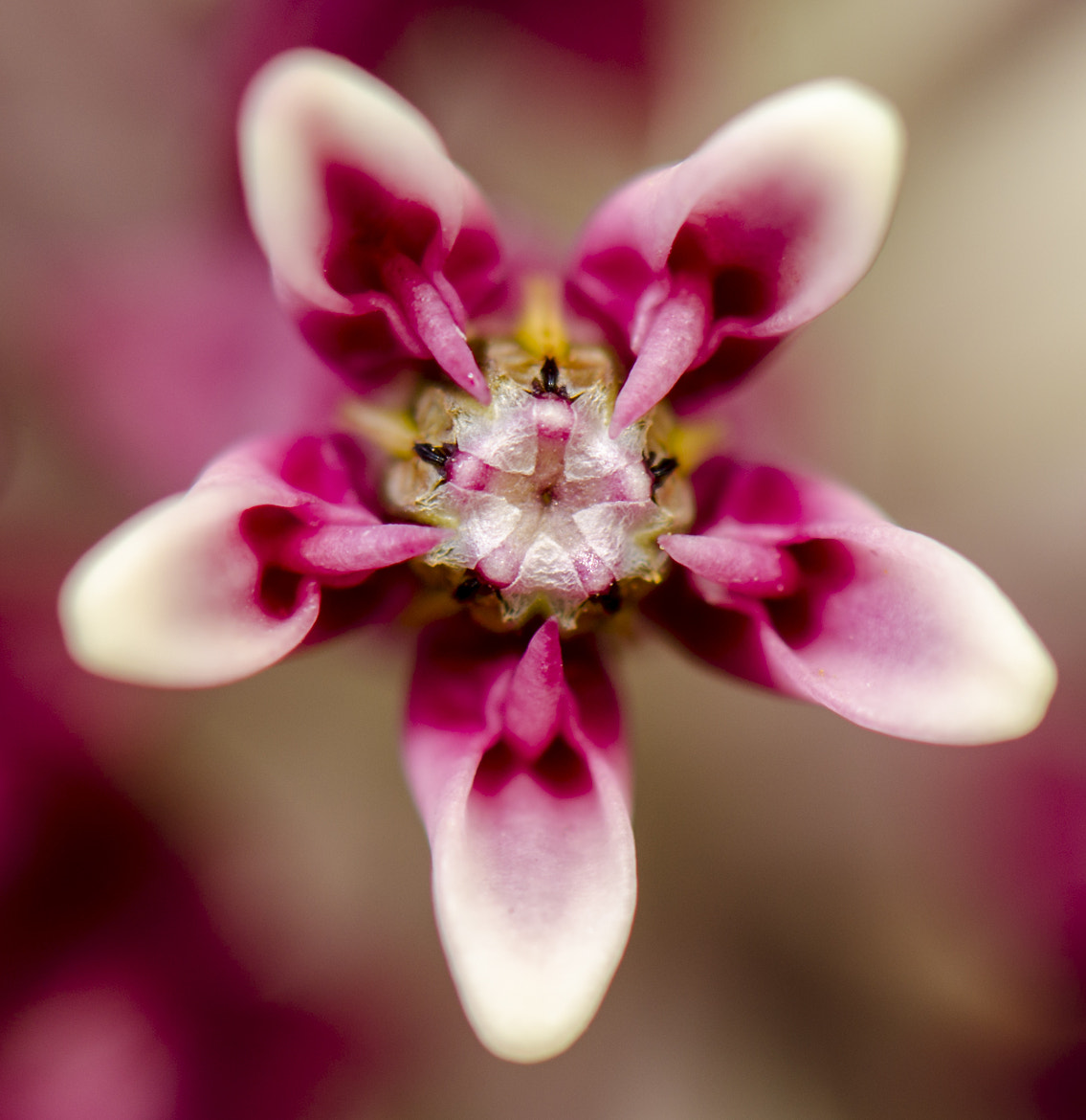 Photograph Alien Flower by Rusty Parkhurst on 500px