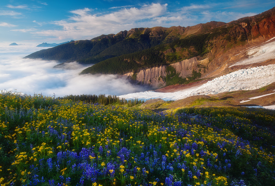 Photograph The Music of the Alpine by Trevor Anderson on 500px