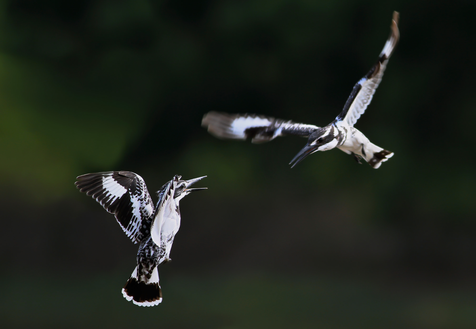 Photograph Flying Battle 3 by sethapol tiptongdee on 500px