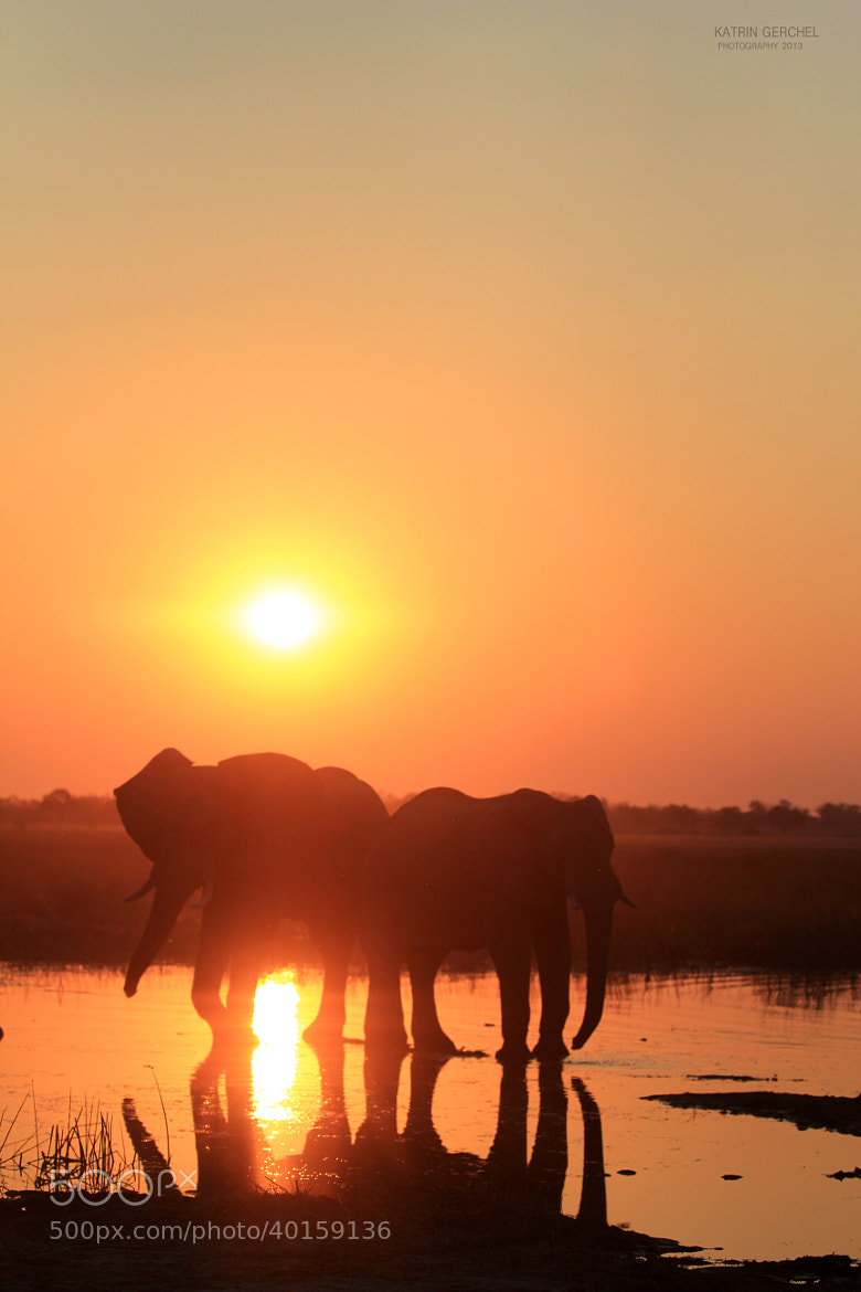 Photograph When the sun sets at Moremi by Katrin Gerchel on 500px