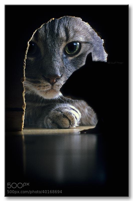 Photograph Cat & Rat by Jeff Morgan on 500px