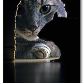 Cat & Rat by Jeff Morgan on 500px.com