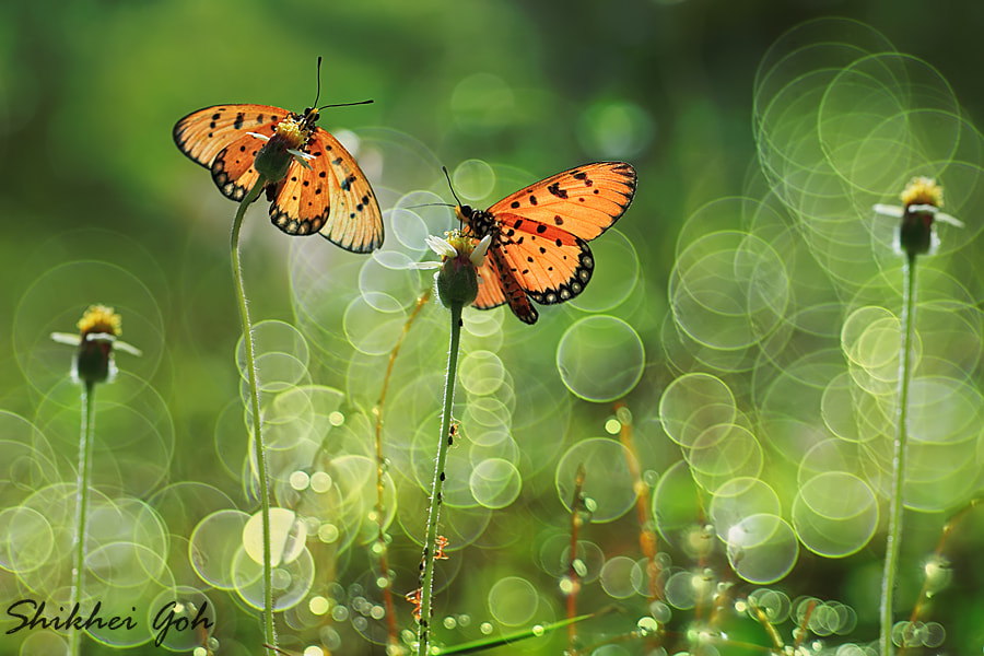 Photograph Just Two Of Us by shikhei goh on 500px