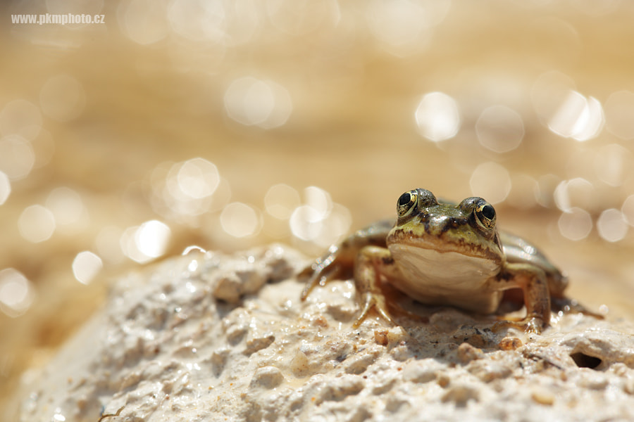 Photograph King of the hill by Peter Krejzl on 500px